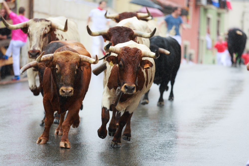Is It Time to Flee This Bull Market?